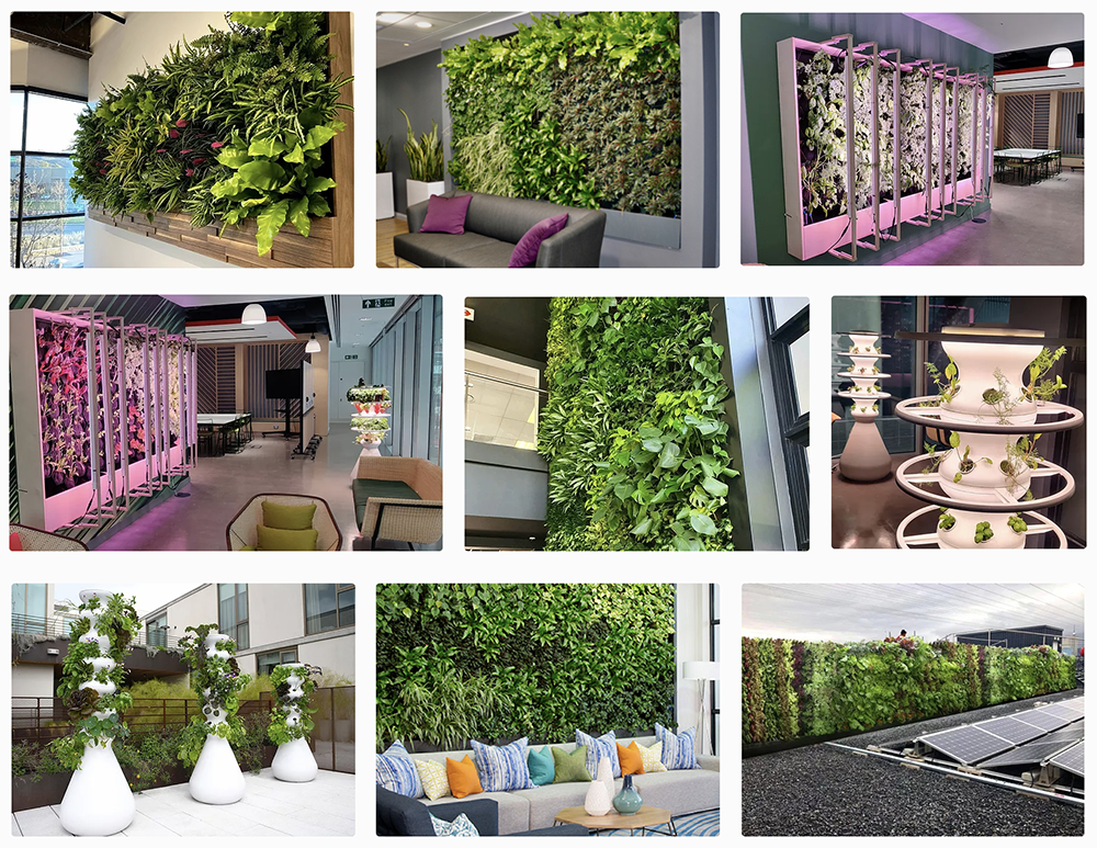 The future of the office environment living walls